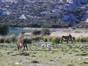 Donkeys at Cuber reservoir Serra de Tramuntana Mallorca