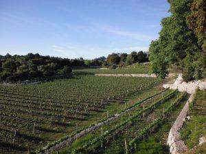 Mortitx vineyards wine production
